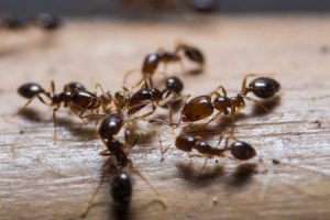 Scientists Study Unique Structures Formed By Fire Ants