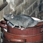 Mice & Rat Removal in Las Vegas, NV