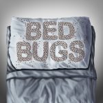 Areas of the Home with Bed Bugs